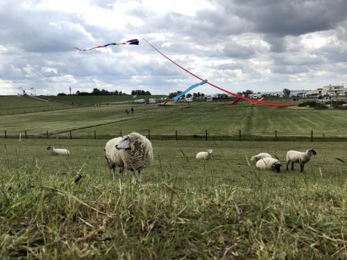 Schafe und Drachen